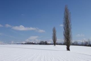 冬の富良野・美瑛 6
