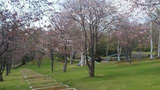 富良野・美瑛の景色 5月①