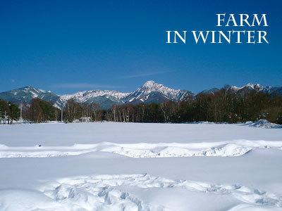冬の農場からの八ヶ岳