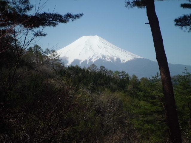 不動湯付近からの富士山
