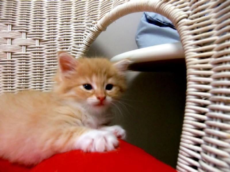 ♪愛猫、愛犬と泊まるプラン☆ペットと一緒に!☆4つ星以上☆ 【冬得】【春得】☆