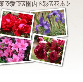 散策で愛でる園内を彩る花たち