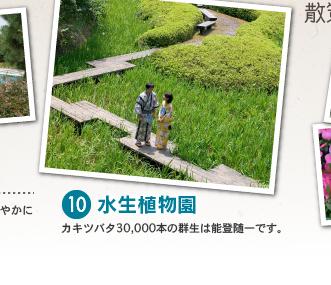 10 水生植物園