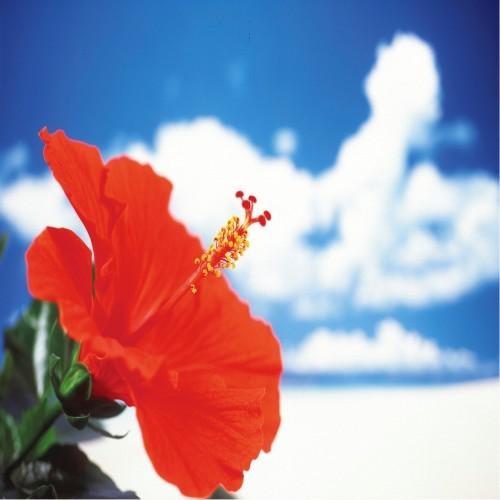 ホテルピースランド石垣島 関連画像 3枚目 楽天トラベル提供