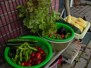 農薬を使わない安全な自家栽培野菜