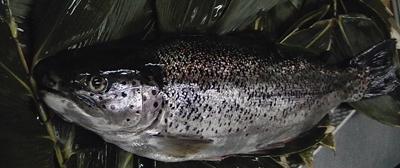 木島平のきれいな水で育った信州サーモン