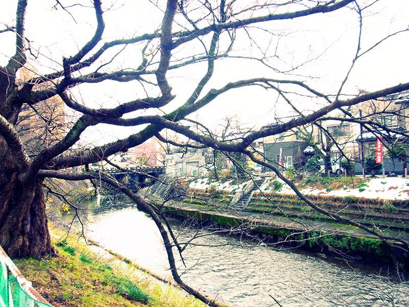 川べりの散歩道