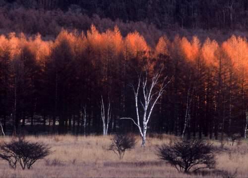 日光の四季かなでる宿 森のうた 関連画像 2枚目 楽天トラベル提供