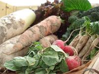鴨川自然王国の無農薬野菜