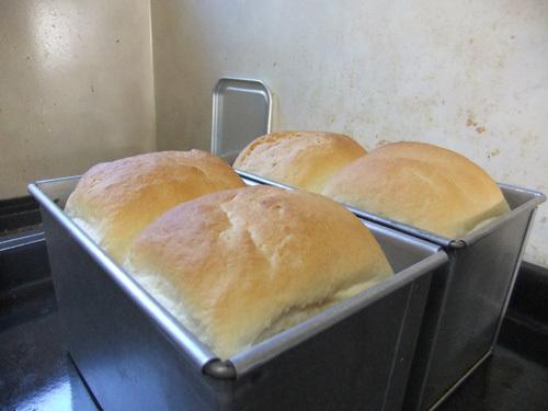 朝のパン2
