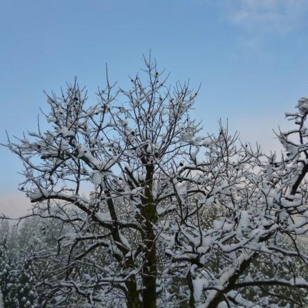 「山の季」きゃら 関連画像 2枚目 楽天トラベル提供