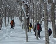 田沢湖高原温泉 どんぐり山荘 関連画像 3枚目 楽天トラベル提供