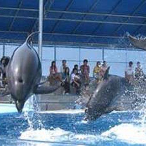 【越前松島水族館☆チケット】2食付きプラン!さかな達に会いに行こう♪クルマで20分☆