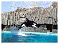 名古屋港水族館写真