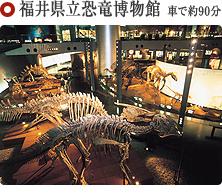 福井県立恐竜博物館 車で約90分