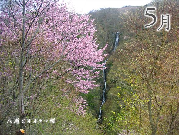 4月 水中のしだれ桜