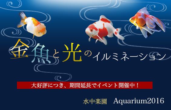 金魚と光のイルミネーション