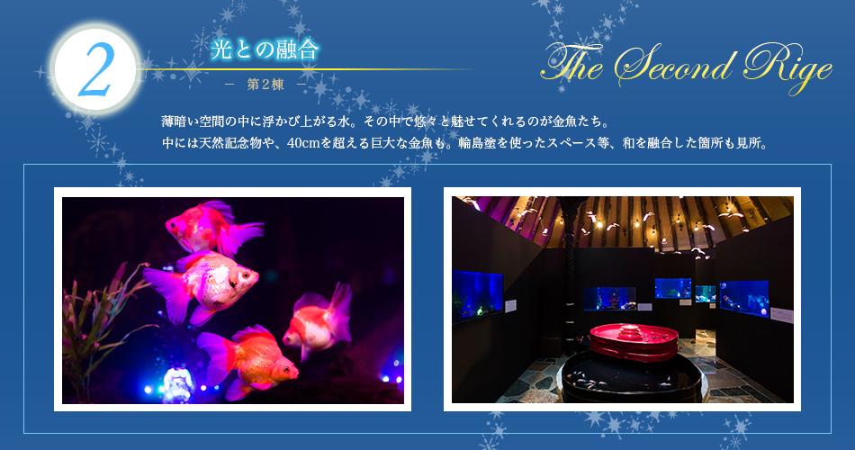 水中楽園03