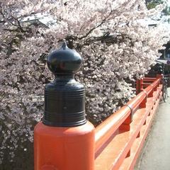 【周辺】中橋と桜~宮川沿いの桜並木~