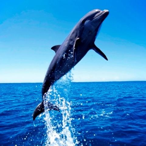 【海で楽しい課外教室】イルカウォッチング付☆「かわいいイルカ」に逢いに行こう♪ 【三大グルメ】