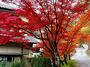 山神温泉 湯乃元館画像