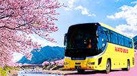 はとバスで行く日帰り春のバスツアー
