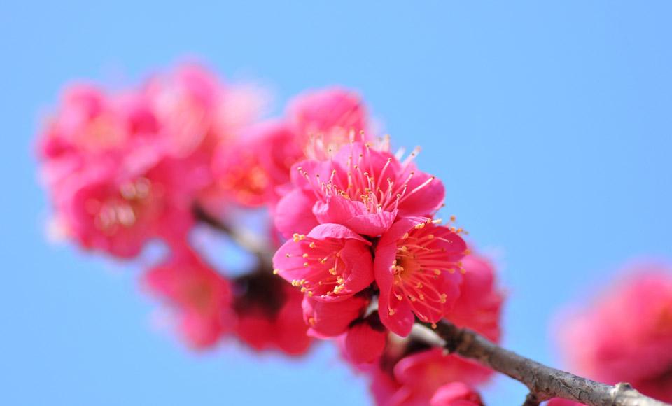 【2名1室プラン】春の陽気に誘われて・・・花爛漫伊豆花回廊