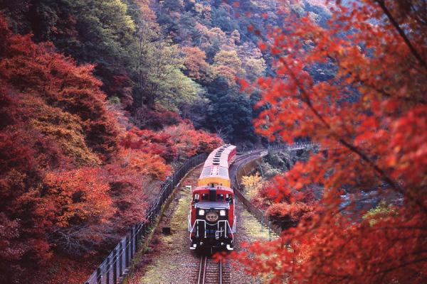 嵯峨野トロッコ列車と嵐山・哲学の道 秋の京都定番スポットと湯葉づくし御膳