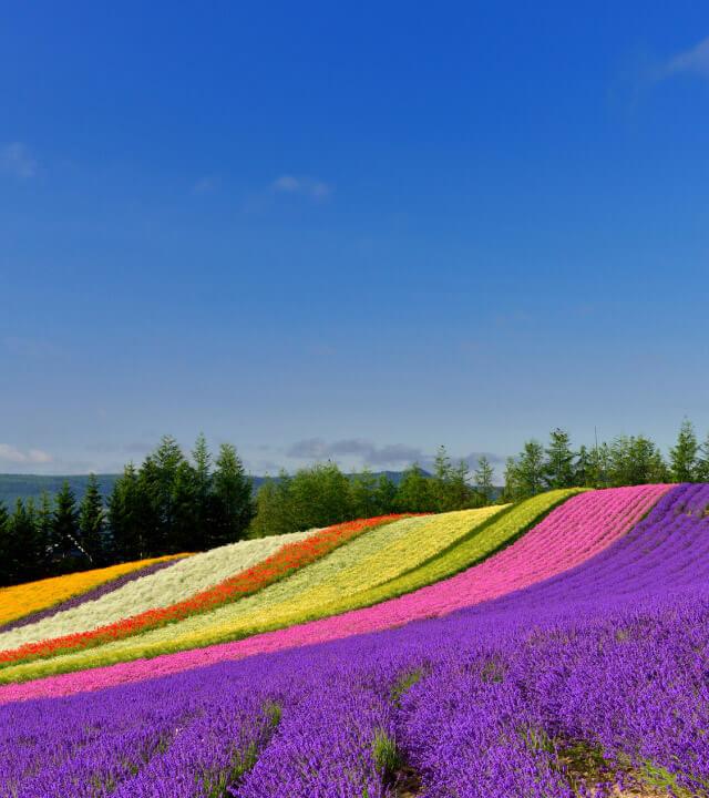 夏の北海道をドライブしよう!