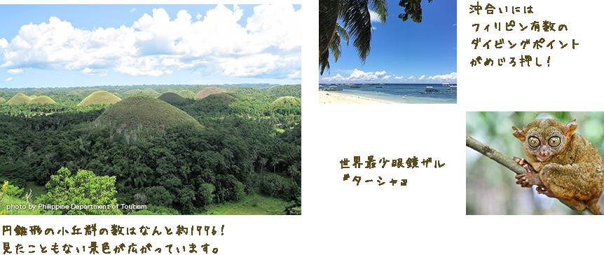 円錐形の小丘群の数はなんと約1776!見たこともない景色が広がっています。 沖合いにはフィリピン有数のダイビングポイントがめじろ押し! 世界最少眼鏡ザル『ターシャ』