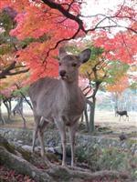 奈良公園・写真