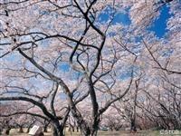 三神峯公園・写真