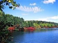 麦草峠と白駒池・写真