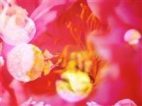 蜷川実花×すみだ水族館 幻想的なクラゲ展示