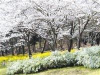 国営武蔵丘陵森林公園 花木園・写真