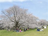 国営昭和記念公園・写真