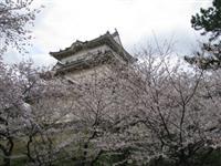 小田原城址公園・写真