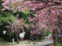 倶利伽羅県定公園・写真