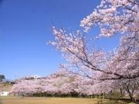 丸岡公園・写真