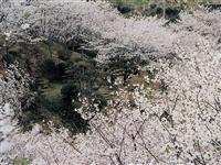 観音ヶ池 市民の森・写真