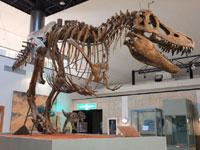 神流町恐竜センター・写真