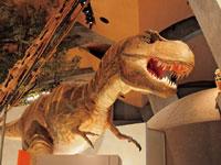 群馬県立自然史博物館・写真