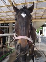 群馬県馬事公苑・写真