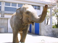 桐生が岡動物園・写真