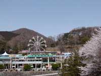 桐生が岡公園の桜・写真