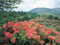 湯の丸高原(群馬県)・写真