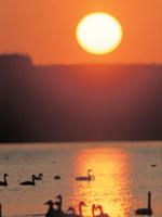 クッチャロ湖・写真
