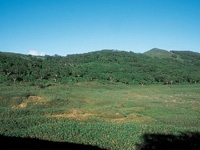 大谷地湿原