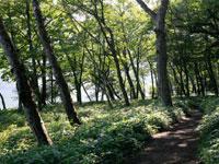 大沼一周ハイキングコース・写真