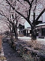 雄川堰・写真